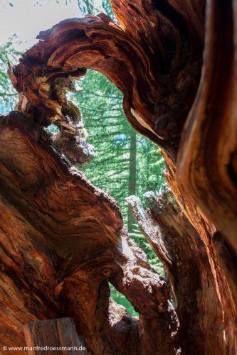 Schweizer Bäume
