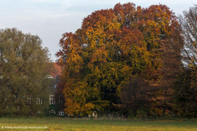 Landschaftspark Hoppenrade