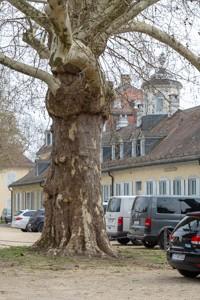 Staatspark Hanau-Wilhelmsbad